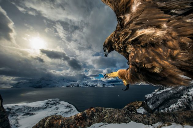 20 лучших фото природы 2019 года по версии Nature Photographer Of The Year