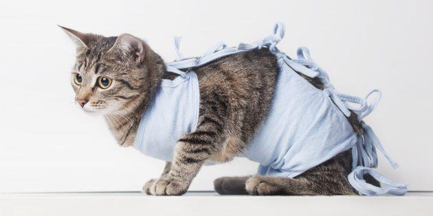 Стерилизация кошек: попона