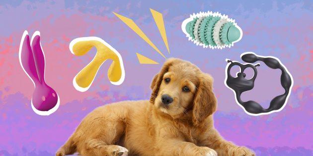 ТЕСТ: Игрушка для собаки или секс-гаджет?