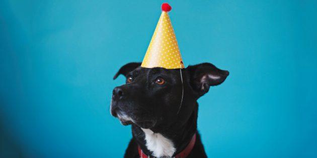 Учёные научились рассчитывать возраст собак в человеческих годах