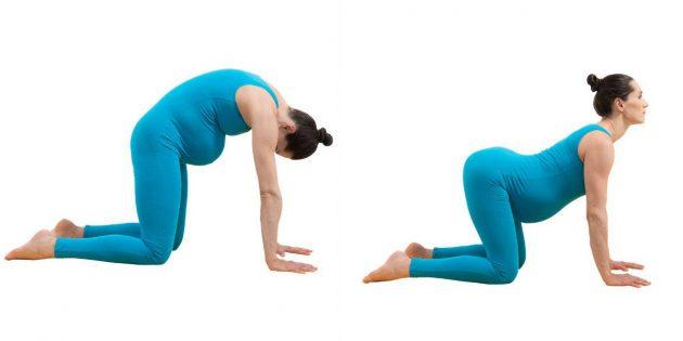 Йога для беременных: поза «кошка-бык» (марджариасана-битиласана)