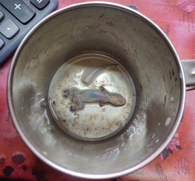 чай с ящерками