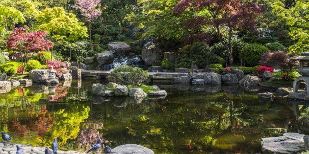 Что посмотреть в Лондоне: японский сад Киото в Холланд-парке