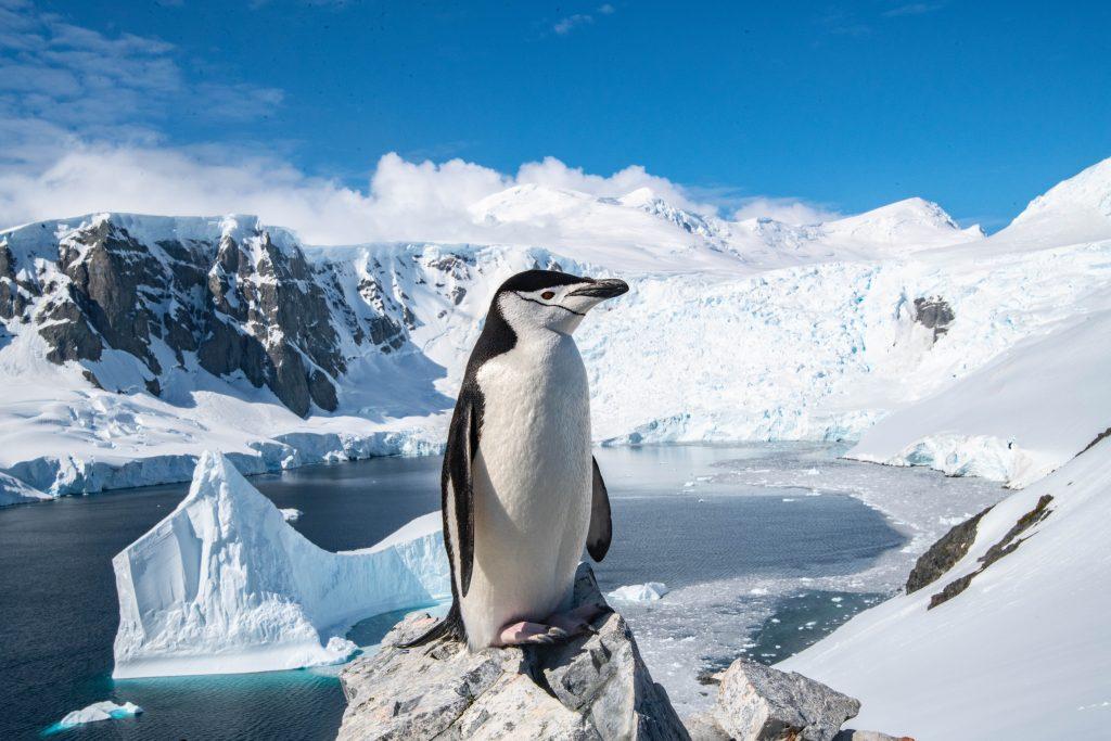 Антарктика: фото пингвина
