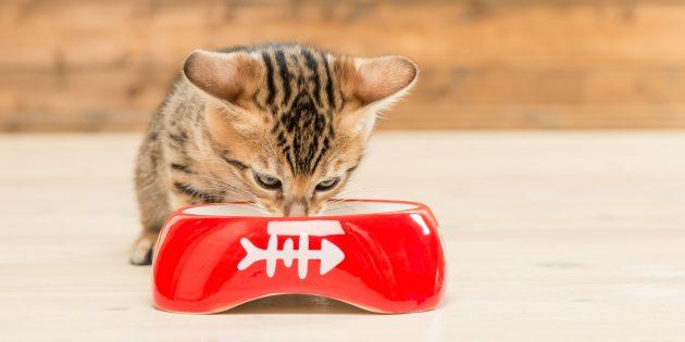 бенгальская кошка чем кормить