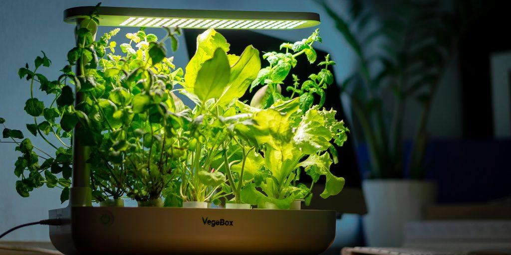Необычные гаджеты: настольная ферма VegeBox