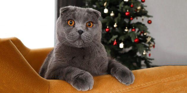 18 советов, как спасти новогоднюю ёлку от кота