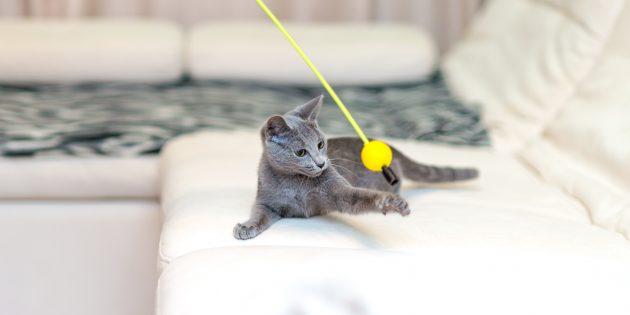 Русская голубая кошка: характер