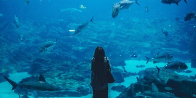 Поход в океанариум
