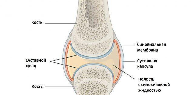 Почему болят суставы: строение