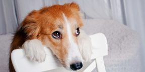 Как понять, что кошку или собаку надо срочно показать ветеринару