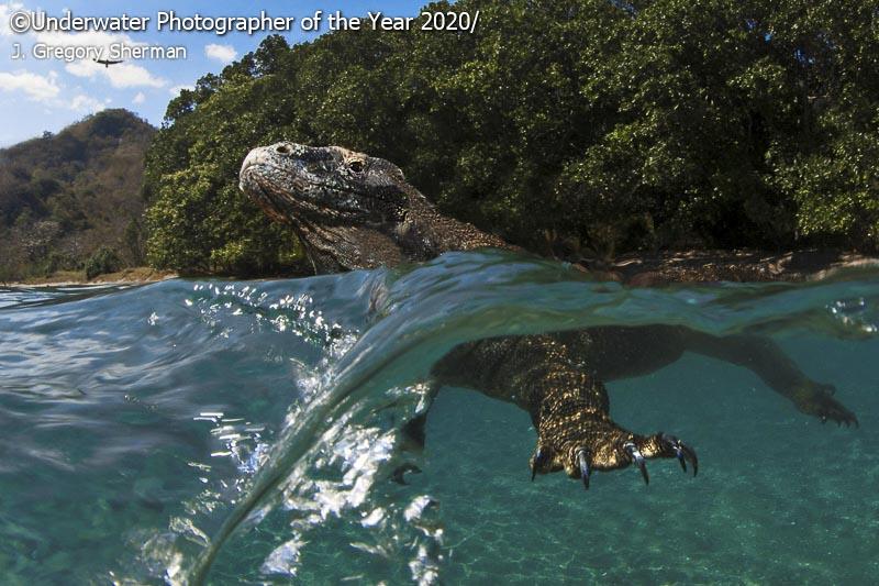 Лучшие подводные фото с конкурса UPY2020