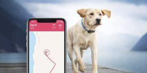 8 полезных гаджетов для домашних животных
