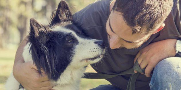 Заблуждения о поведении животных: собаки невероятно преданные
