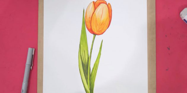 Как нарисовать один реалистичный тюльпан