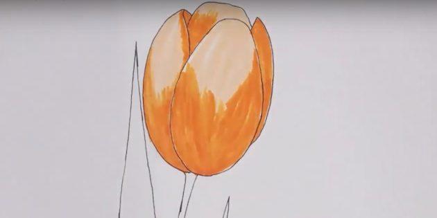 Как нарисовать тюльпан: покрасьте бутон в оранжевый цвет