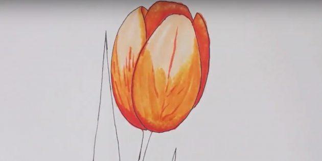 Как нарисовать тюльпан: пройдитесь по рисунку бесцветным маркером