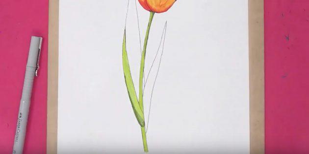 Как нарисовать тюльпан: покрасьте стебель и часть листа