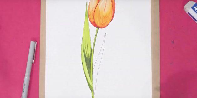 Как нарисовать тюльпан: дорисуйте левый лист