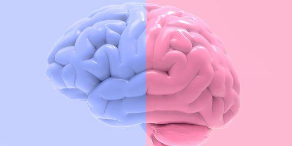 Женский мозг отличается от мужского? Нет. Доказываем со ссылками на научные источники