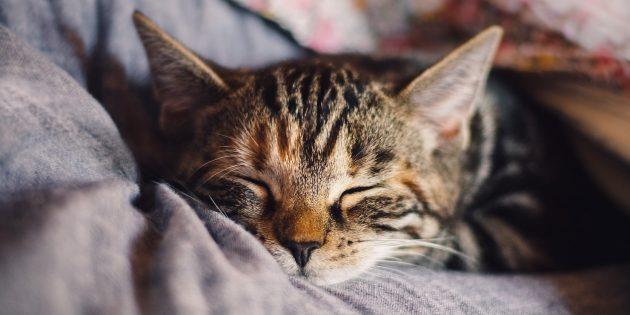 Идеи для бизнеса без вложений: услуги няни для животных
