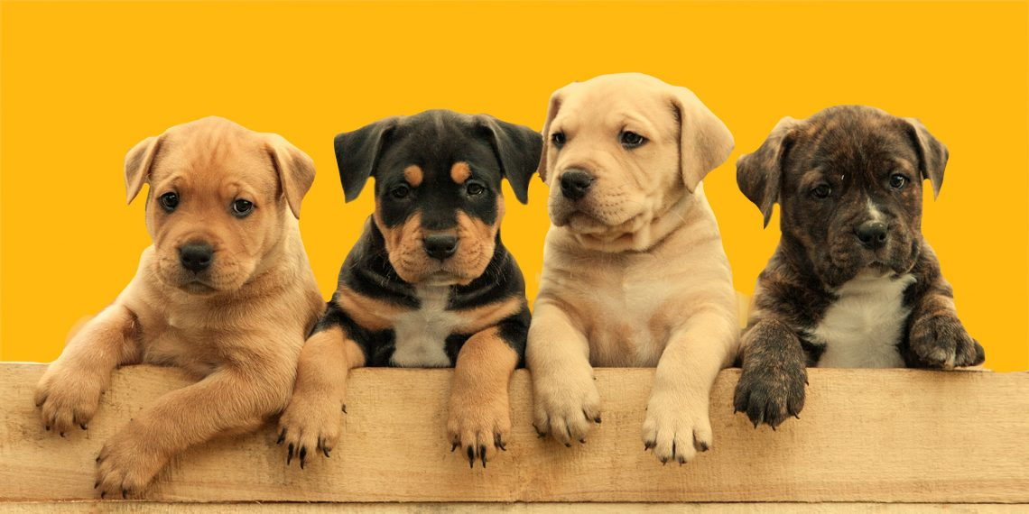 ТЕСТ: Станете ли вы хорошим хозяином для щенка? Тест для всех, кто обожает собак!