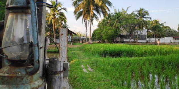 Достопримечательности Лангкави: музей рисовой культуры Ламан Пади