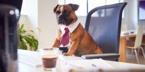Опрос: хотели бы вы завести питомца на работе?