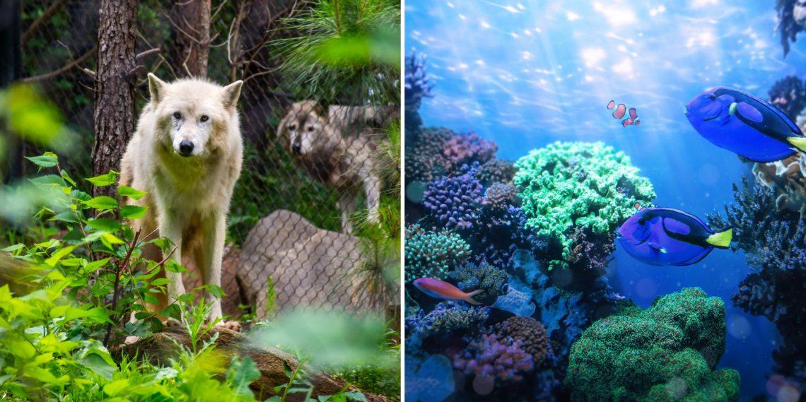 20 веб-камер из океанариумов или зоопарков