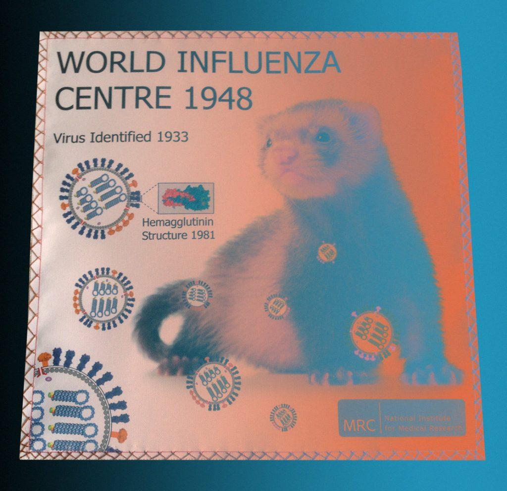 Существование вируса гриппа было доказано именно в экспериментах на хорьках, они же до сих пор служат моделью для многих вирусных болезней