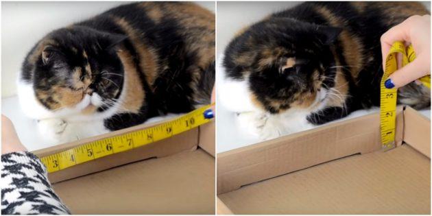 Когтеточка для кошки своими руками: сделайте измерения