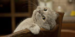 Найдите котиков! 10 фотографий для проверки внимательности