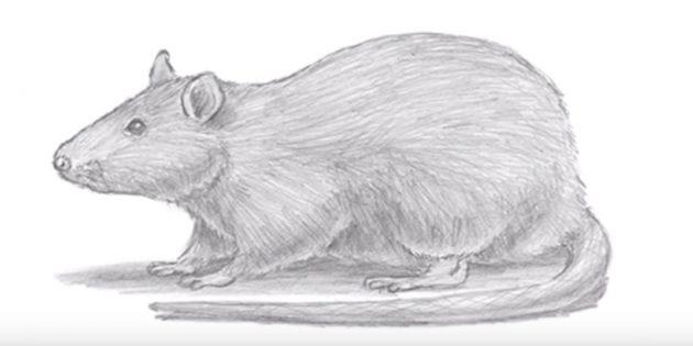 Как нарисовать реалистичную мышь или крысу
