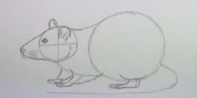 Как нарисовать мышь: нарисуйте лапы