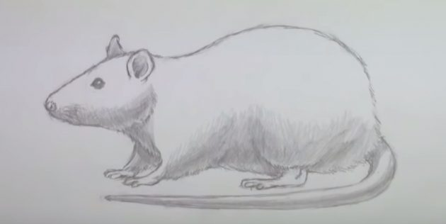 Как рисовать мышку: затемните некоторые участки