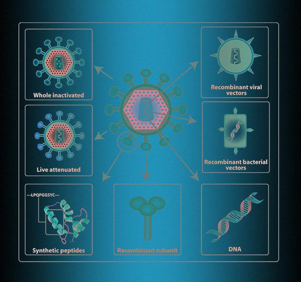 Различные подходы к созданию вакцины (на примере ВИЧ)