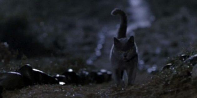 Фильмы про кошек: «Кладбище домашних животных»