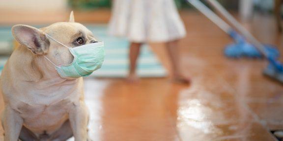 Можно ли заразиться коронавирусом от животных