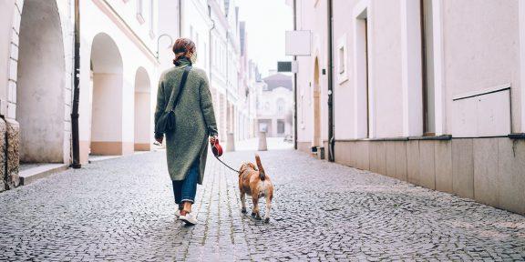 Как гулять с собакой во время карантина: 5 простых правил