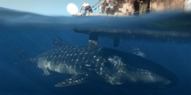 Фильмы про акул: «Кон-Тики»