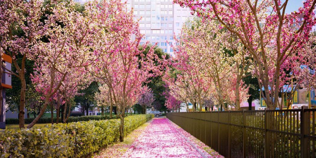 «Румянцево-Парк», цветущая сакура