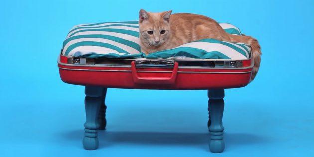 Как сделать лежанку для кошки из чемодана своими руками