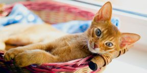 7 простых способов сделать лежанку для кошки своими руками