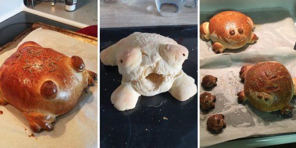Хлебные жабы заполонили соцсети. Что это и откуда?