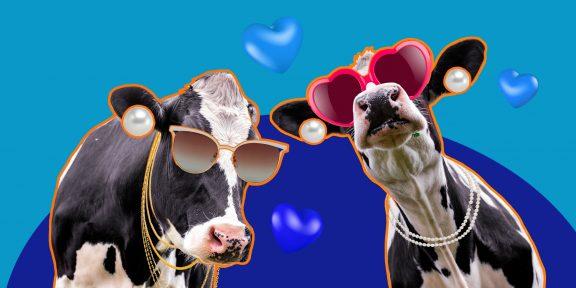 ТЕСТ: На какую корову вы похожи?