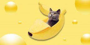 Надо брать: необычный домик-банан для кошки или собаки