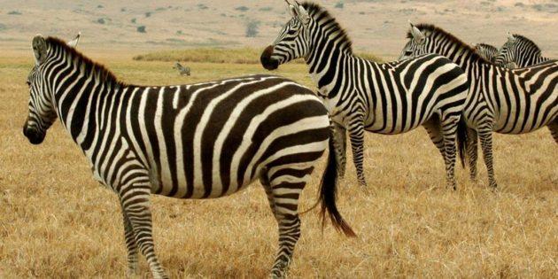 Документальные фильмы о природе: «Животные — прекрасные люди»