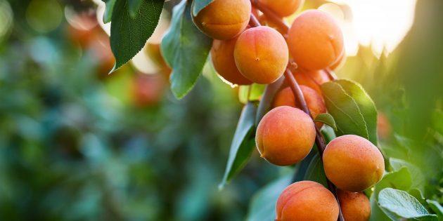 Сезонные товары: абрикосы
