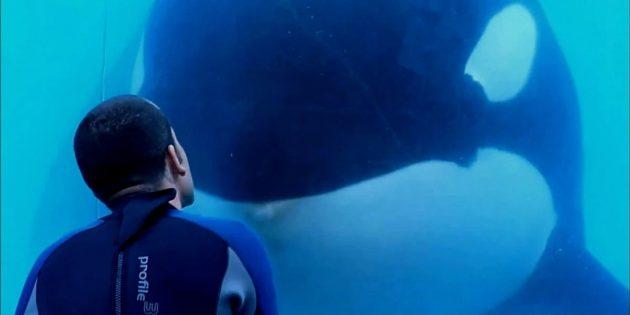 Документальные фильмы про природу: «Чёрный плавник»