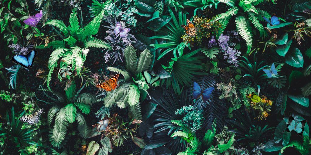 Сколько бабочек на картинке?